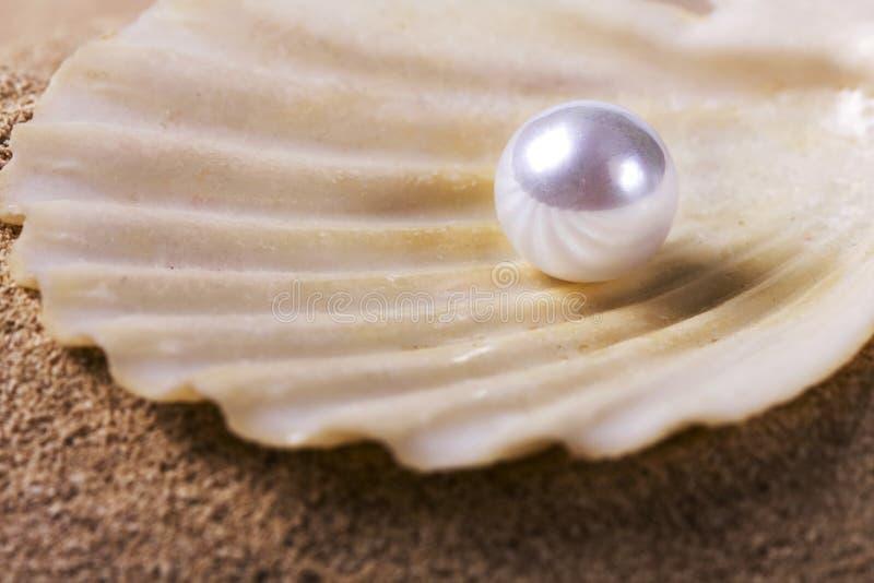 Perle auf dem Seashell stockbild