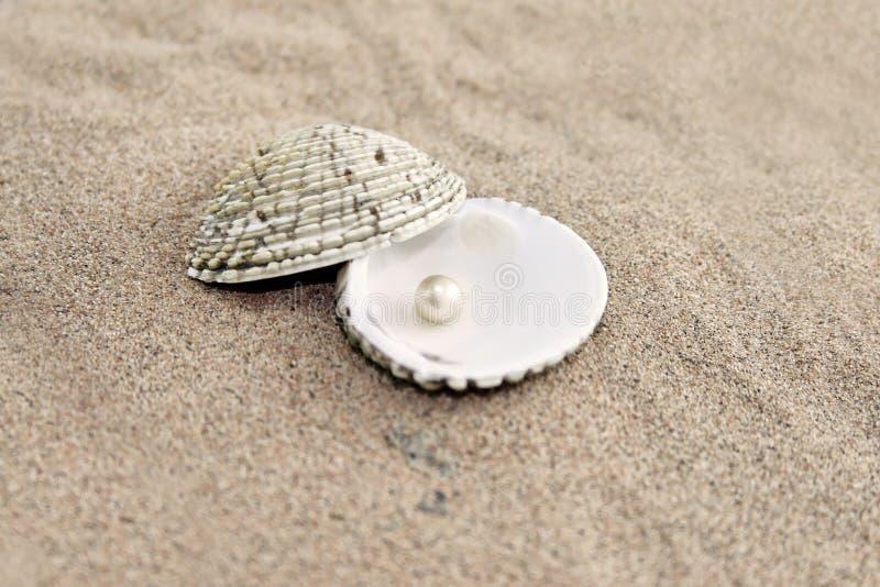 Perle im Shell lizenzfreie stockbilder