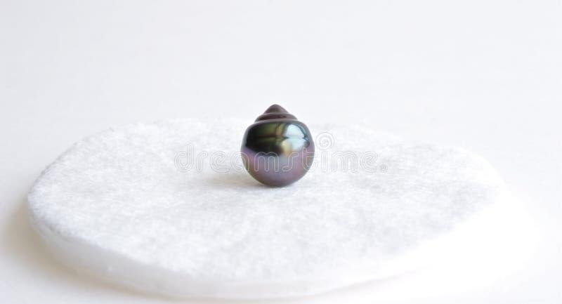 Perle noire image stock