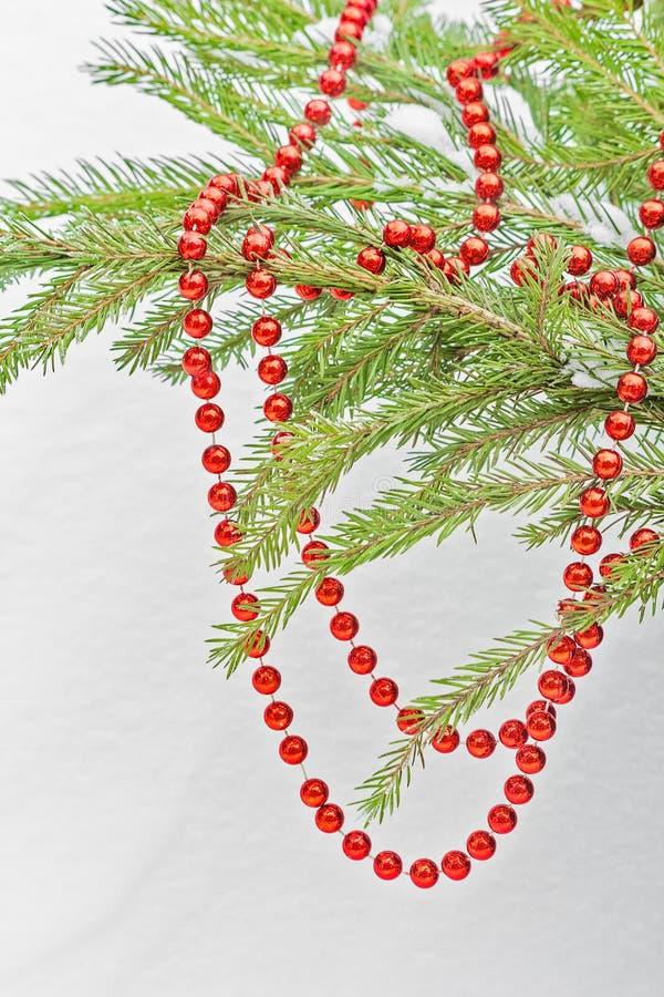 Perle rosse di Natale sul ramo verde dell'abete fotografia stock libera da diritti