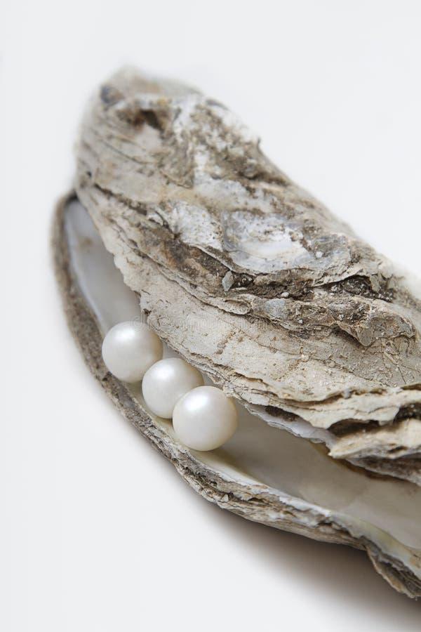 Perle und Auster lizenzfreie stockfotos