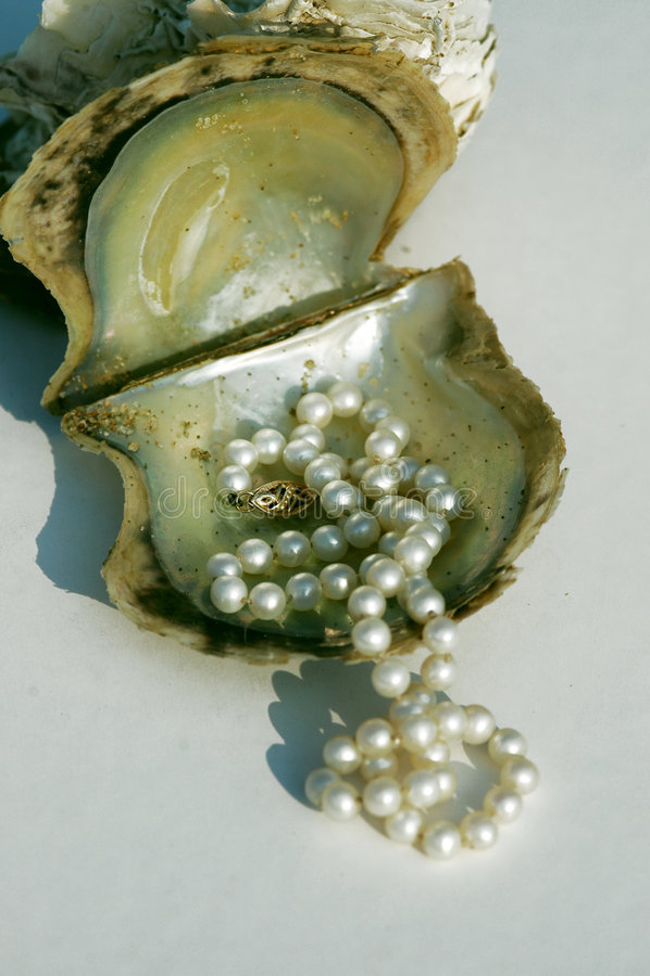 Perlen auf Austerenshell lizenzfreie stockfotos