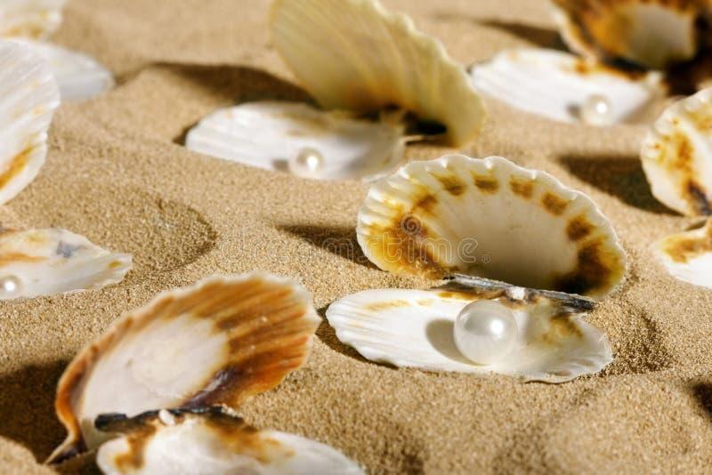 Perlen in den Seashells lizenzfreies stockfoto