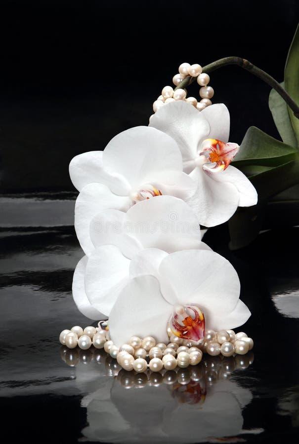 Perles blanches d'orchidée et de perle images stock