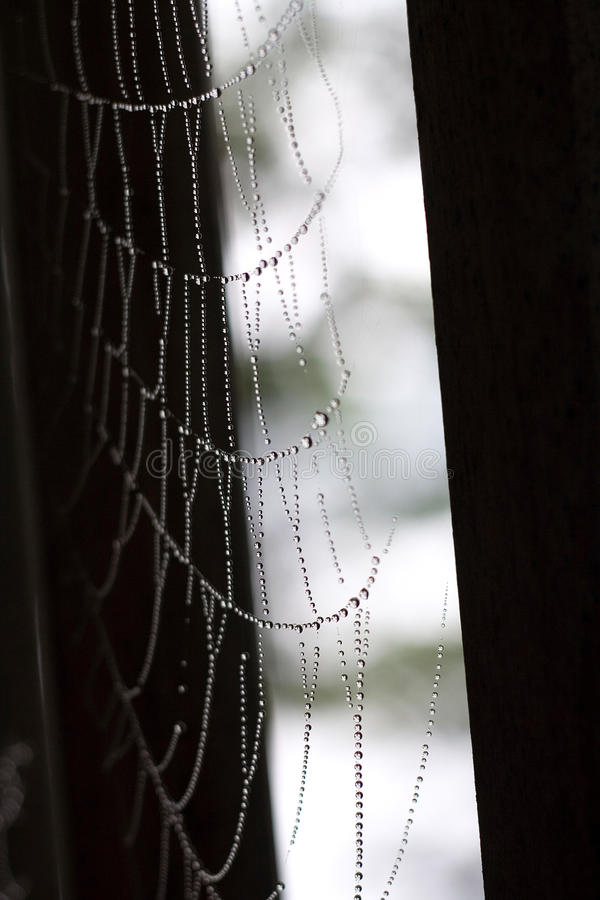 Perles de toile d'araignée photo libre de droits