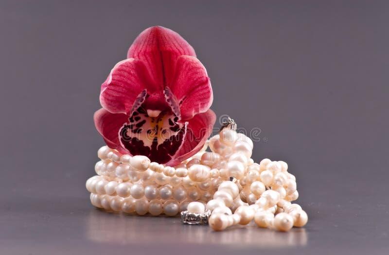 Perles et bourgeon d'orchidée photos libres de droits