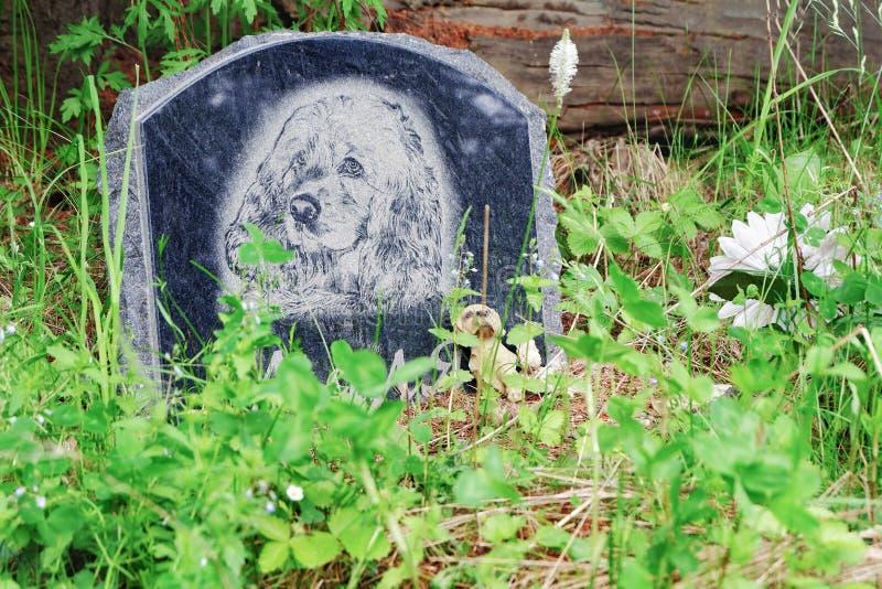 Perm Krai, Russie - 13 juin 2019 : Pierre tombale sur la tombe du chien L'endroit d'enterrement du chien photographie stock libre de droits