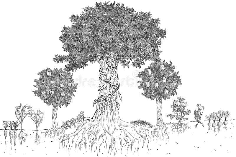 permaculture图解的手拉的剪影例证  皇族释放例证