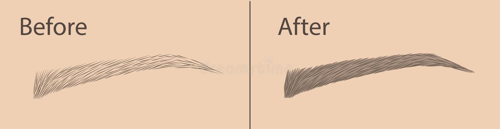 Permanent makeup . Correction of the shape and coloring of the eyebrows. Salon procedure. Makeup. Vector stock illustration