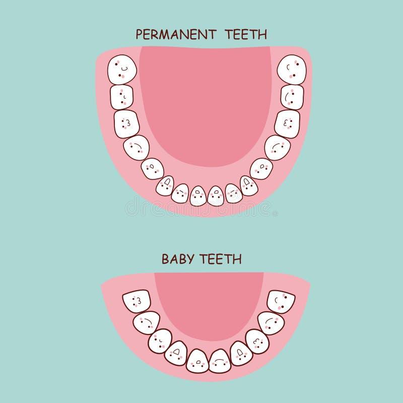 Permanent teeth and baby teeth royalty free illustration