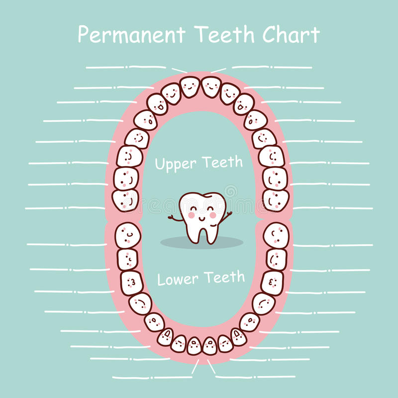 Permanent tooth chart record. Great for health dental care concept stock illustration