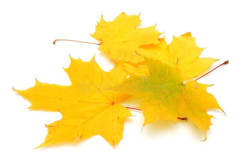 Permesso di autunno giallo fotografia stock libera da diritti