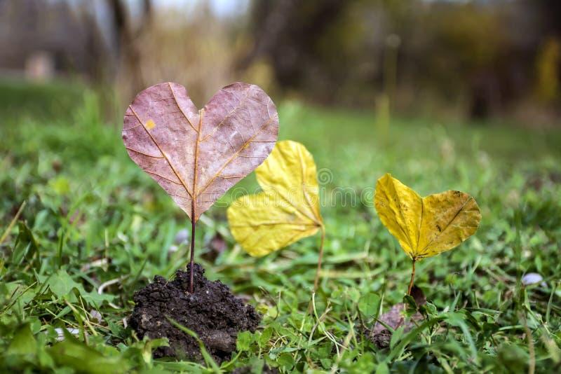 Permesso di autunno rosso in forma di cuore Concetto di amore immagine stock libera da diritti