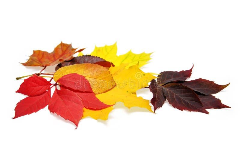 Permesso di autunno variopinto fotografia stock