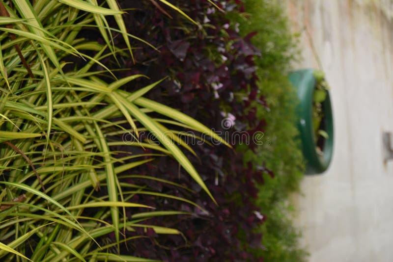 Permesso di verde di fotografia della natura di immagine di sfondo fotografia stock