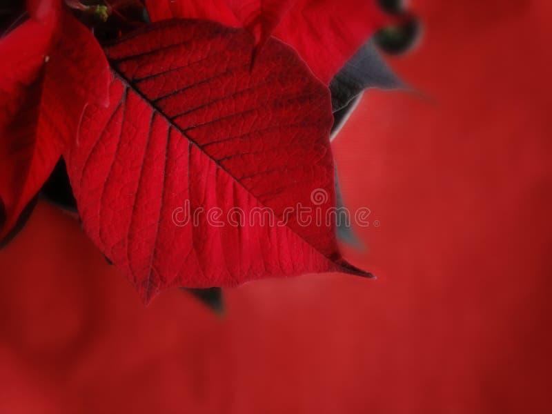 Permesso rosso del fiore del fondo di congratulazioni della carta di natale immagine stock libera da diritti