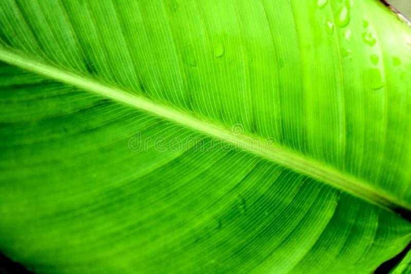 Permesso verde fotografie stock