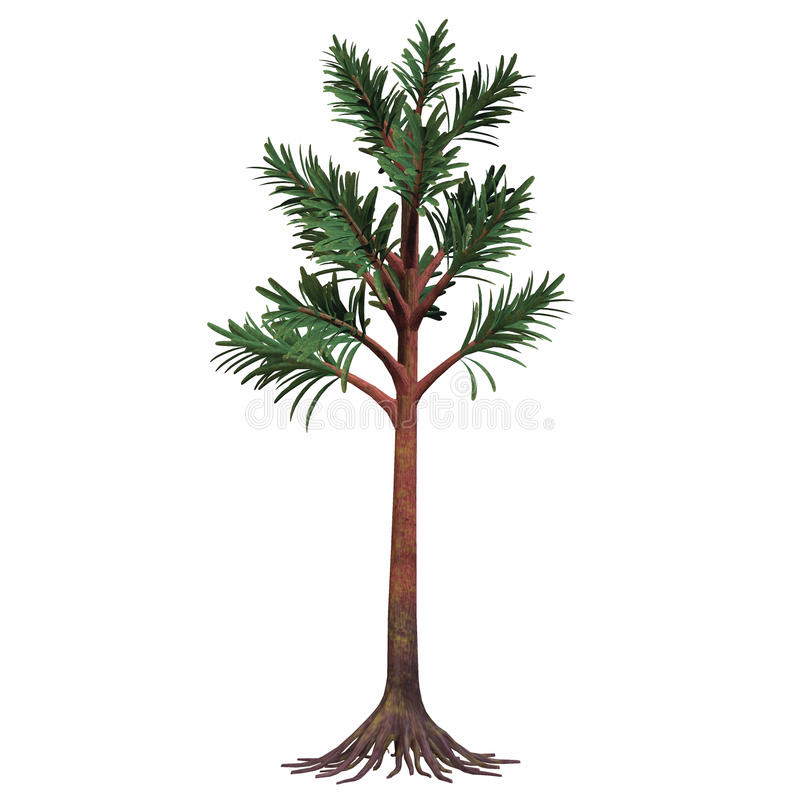 Permian Cordaites Tree. Cordaites are considered the ancestors of conifers. They were plants with an arboreal shape. They could grow very high and lived during stock illustration