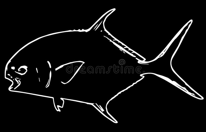 Permit fish fishing on black background. Permit are usually found in shallow, tropical waters such as mudflats, channels, and muddy bottoms stock illustration
