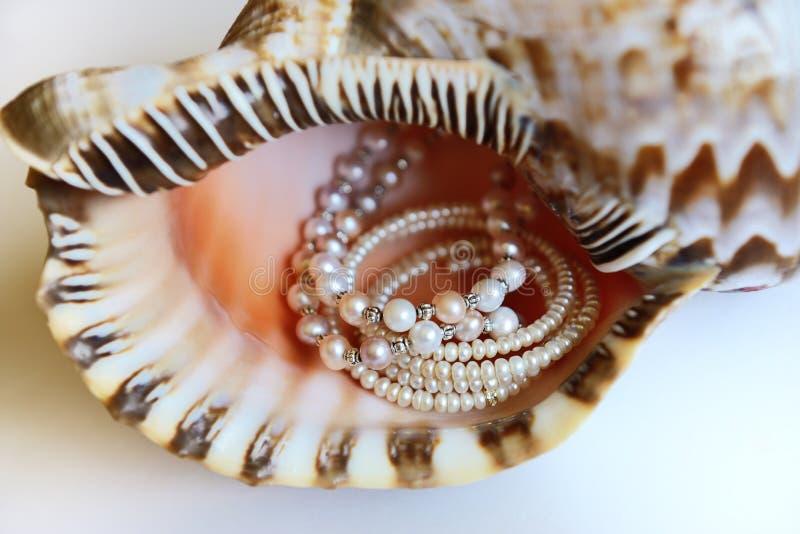 Perolize a colar e o bracelete em um shell gigante do chifre fotos de stock