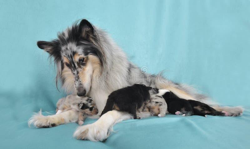 Perra con los perritos. foto de archivo libre de regalías