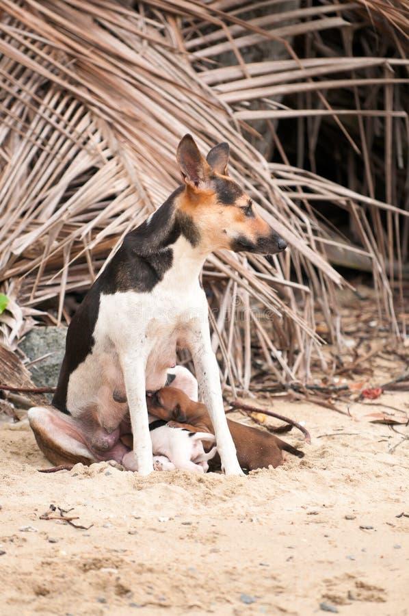 Perra de la playa con los perritos fotos de archivo