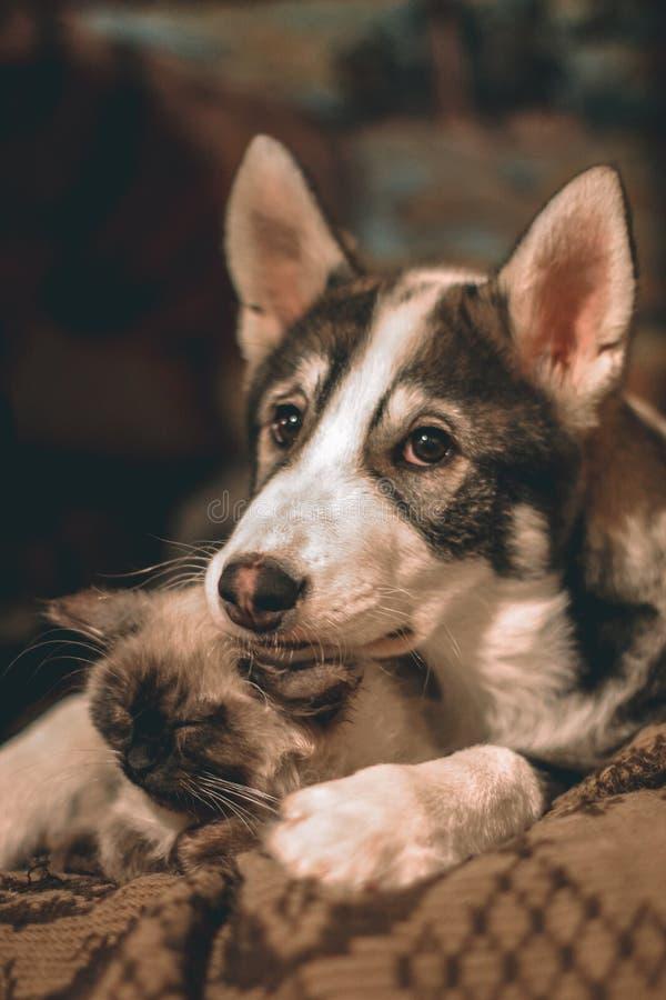 Perrito amistoso y gatito que mienten en un abrazo imagen de archivo libre de regalías