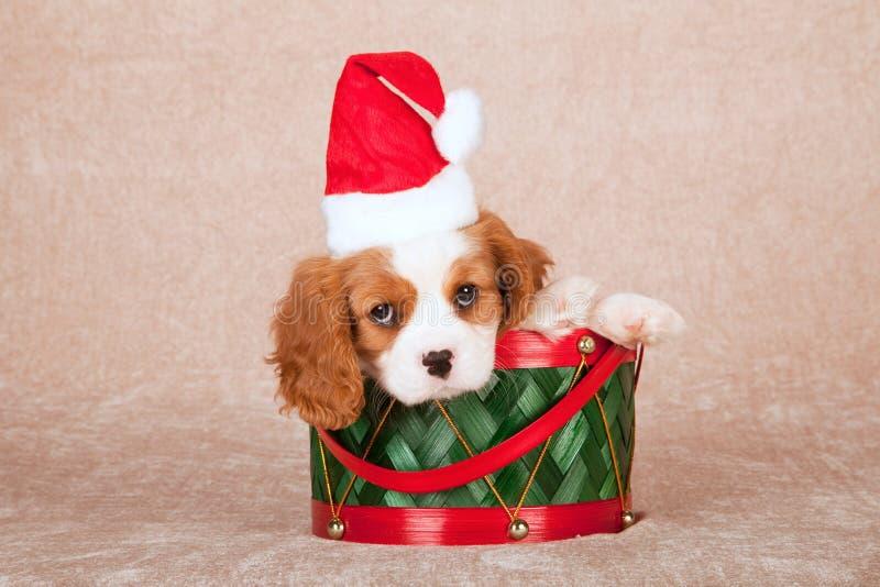 Perrito arrogante de rey Charles Spaniel que lleva el sombrero del casquillo de Papá Noel que se sienta dentro del tambor verde d foto de archivo libre de regalías