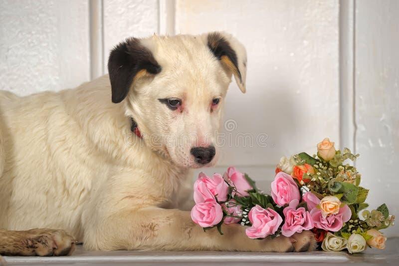 Perrito blanco de los puntos negros con un ramo de rosas imagen de archivo