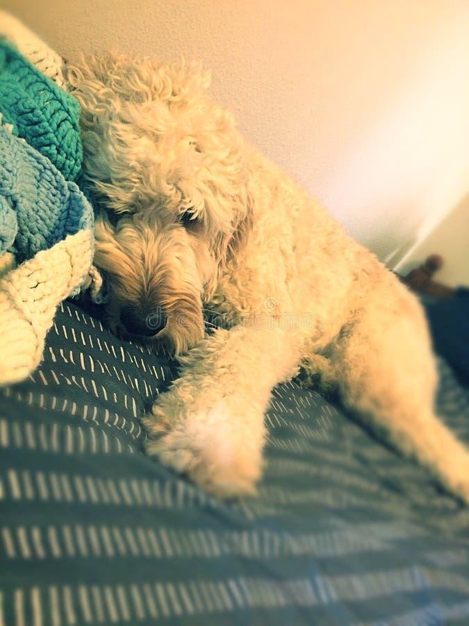 Perrito cansado imagen de archivo libre de regalías