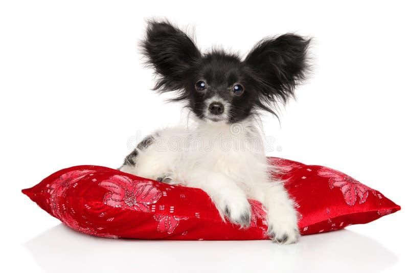 Perrito continental de Toy Spaniel que miente en la almohada roja foto de archivo libre de regalías