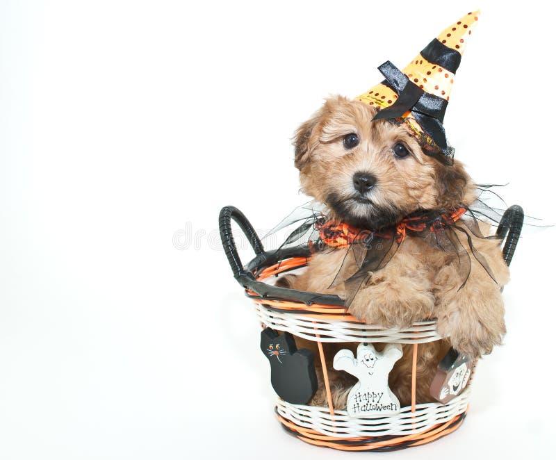 Perrito de Halloween foto de archivo