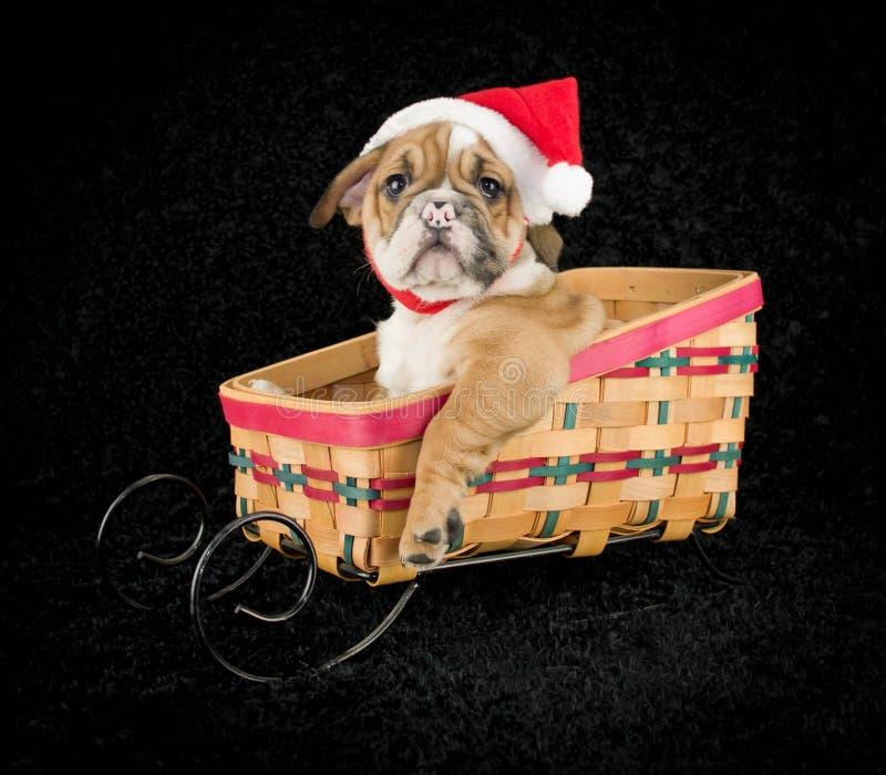 Perrito de la Navidad fotografía de archivo libre de regalías