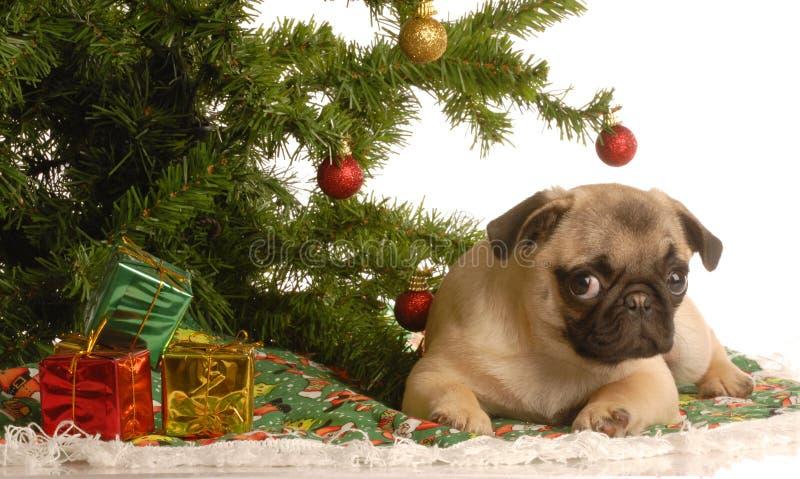 Perrito del barro amasado bajo el árbol de navidad foto de archivo