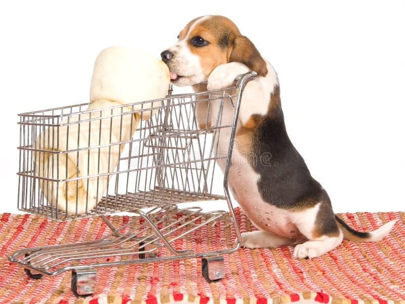Perrito del beagle con la carretilla de las compras fotos de archivo