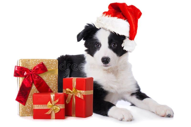 Perrito del border collie con los regalos del sombrero y de la Navidad de santa fotografía de archivo
