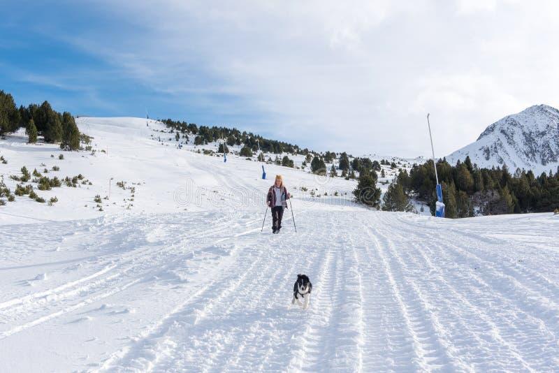 Perrito del border collie en el bosque en invierno fotos de archivo libres de regalías
