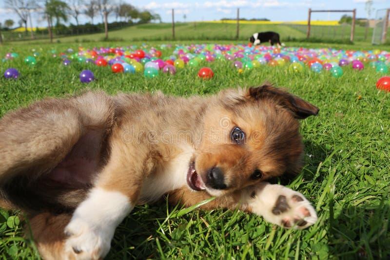 Perrito del border collie en el jardín fotos de archivo libres de regalías