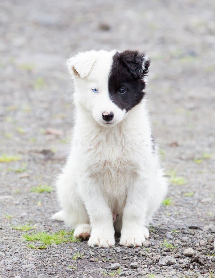 Perrito del border collie en una granja fotos de archivo