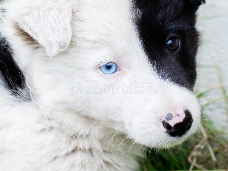 Perrito del border collie en una granja imagen de archivo
