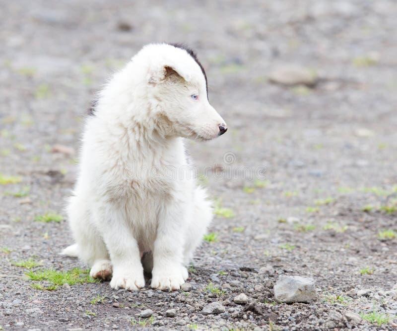 Perrito del border collie en una granja foto de archivo libre de regalías