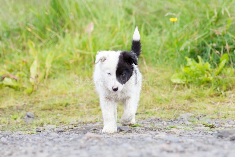 Perrito del border collie en una granja fotos de archivo libres de regalías