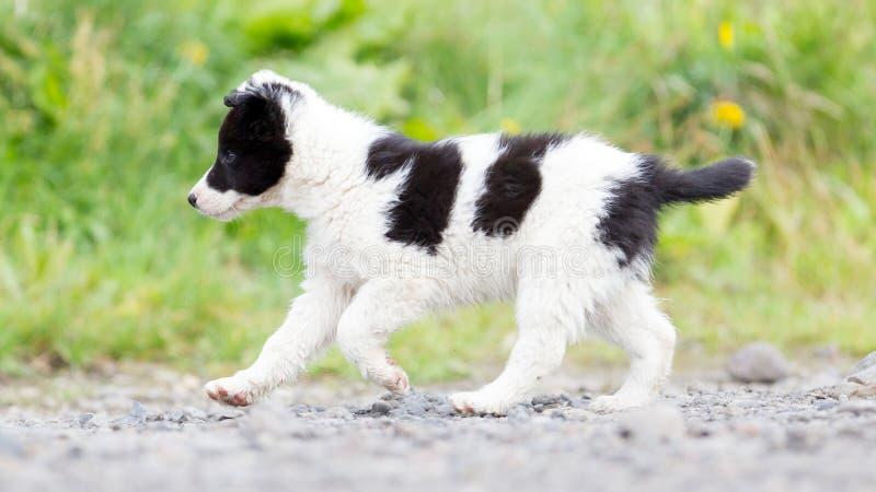Perrito del border collie en una granja imagenes de archivo