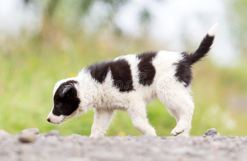 Perrito del border collie en una granja imágenes de archivo libres de regalías