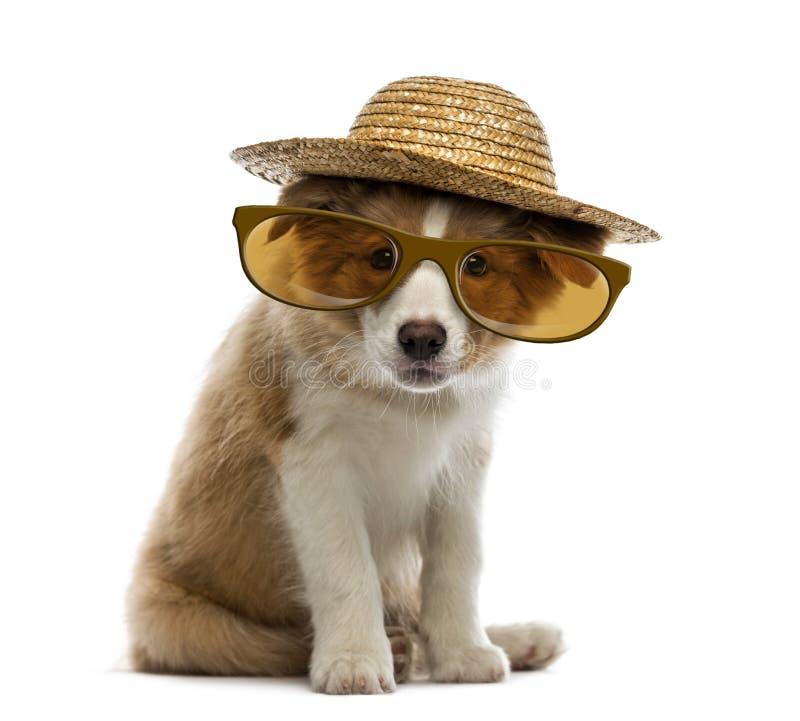 Perrito del border collie que lleva un sombrero y los vidrios de paja foto de archivo