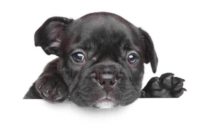 Perrito del dogo francés fotos de archivo