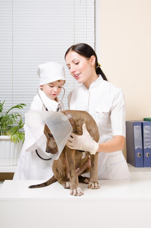 Perrito del estetoscopio de dos veterinarios que escucha imagen de archivo libre de regalías