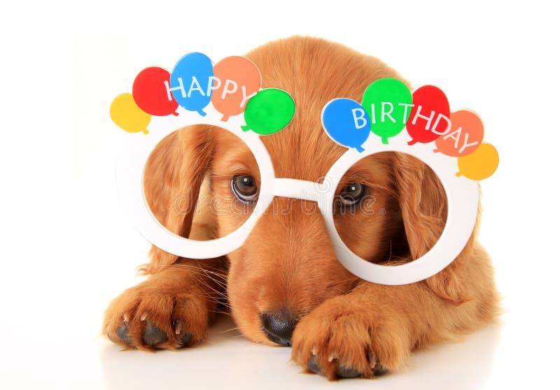 Perrito del feliz cumpleaños imagen de archivo libre de regalías