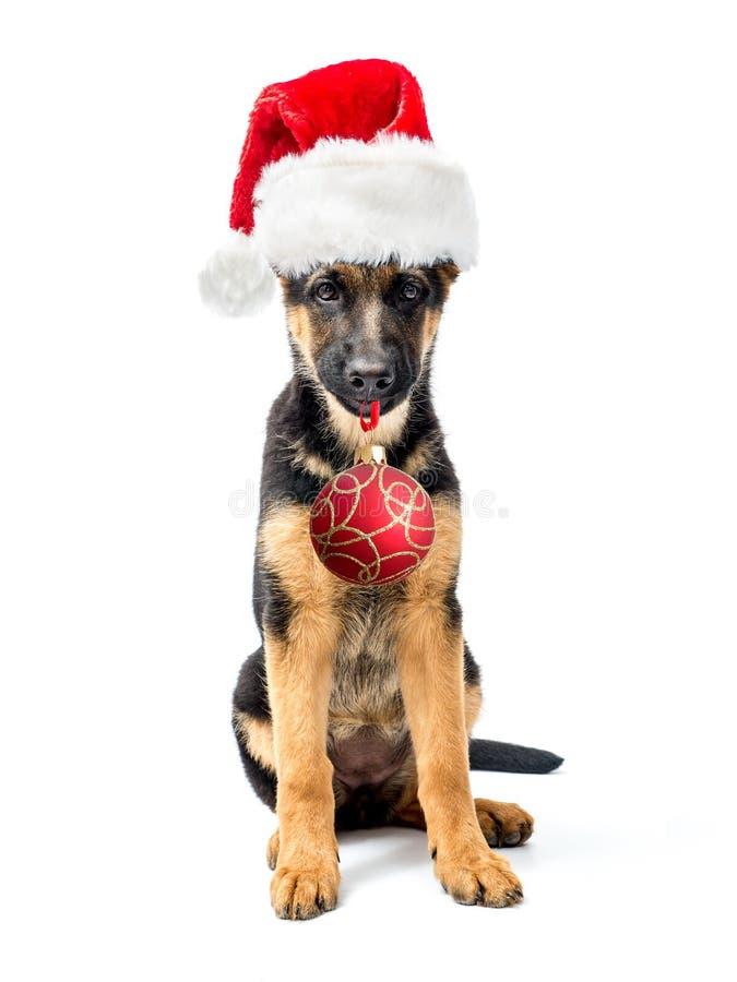 Perrito del pastor alemán que lleva el sombrero de Papá Noel fotografía de archivo libre de regalías