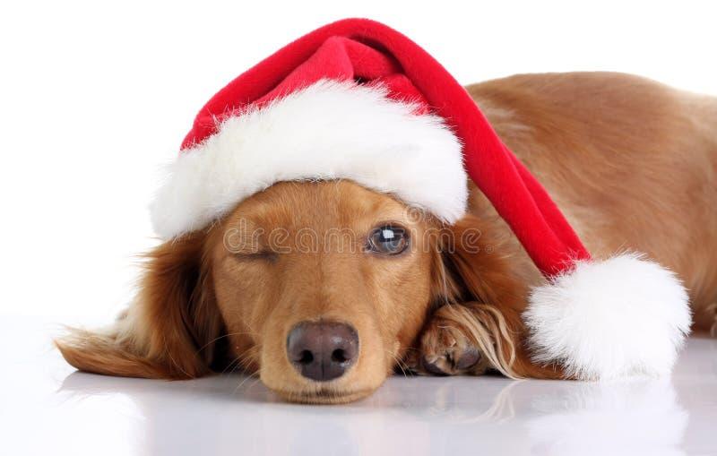 Perrito del perro basset que lleva el sombrero de Papá Noel fotos de archivo